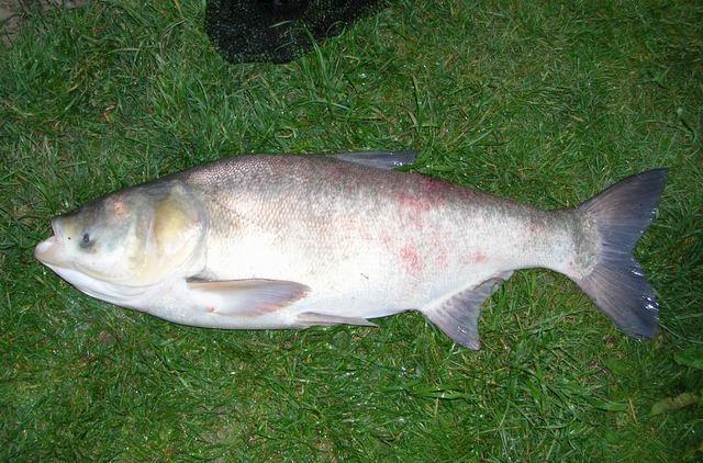 Naše ryby